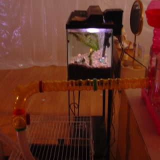 Pet Dreams (bedroom to lab transition, detail), 2006